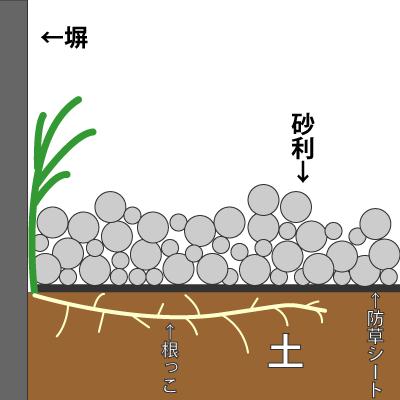 雑草の生え方その1