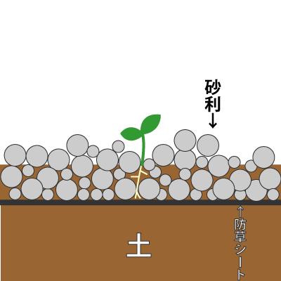 雑草の生え方その2