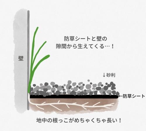 防草シートと壁の隙間から生えてくるスギナ